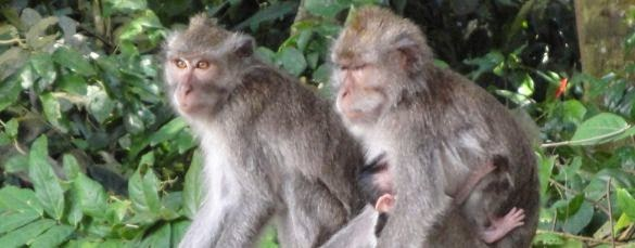 Ubud Monkey Forest - Bali, Holidays, Tours, Attractions
