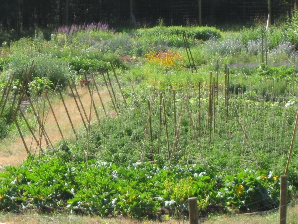 Landscape Gardening Apprenticeships : The gardening apprentice march