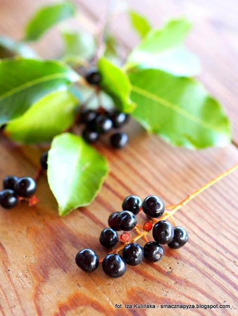 kisiel czeremchowy , czeremcha , owoce czeremchy , dzikie owoce , rośliny lecznicze , podlasie , desery , legumina , zbieractwo , kuchnia domowa , domowe jedzenie