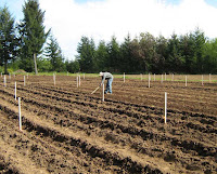 Nathanael planting