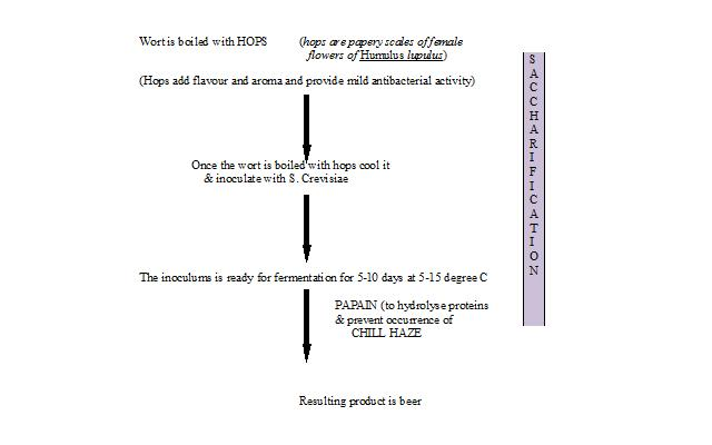 Free Biotechnology Notes: BEER (Schematic Representation)