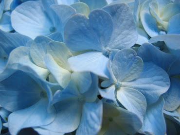 #10 Flowers Wallpaper