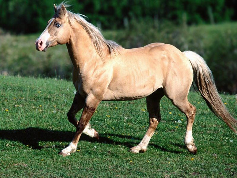 Quarter Horse |...