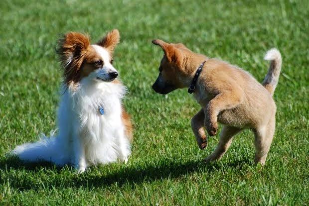Språksäkra hundar