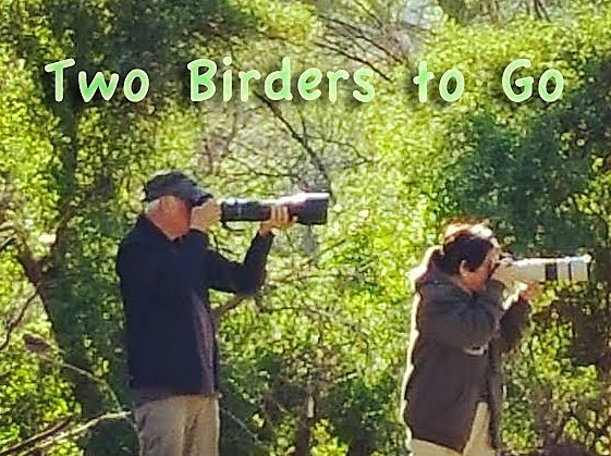 TWO BIRDERS TO GO