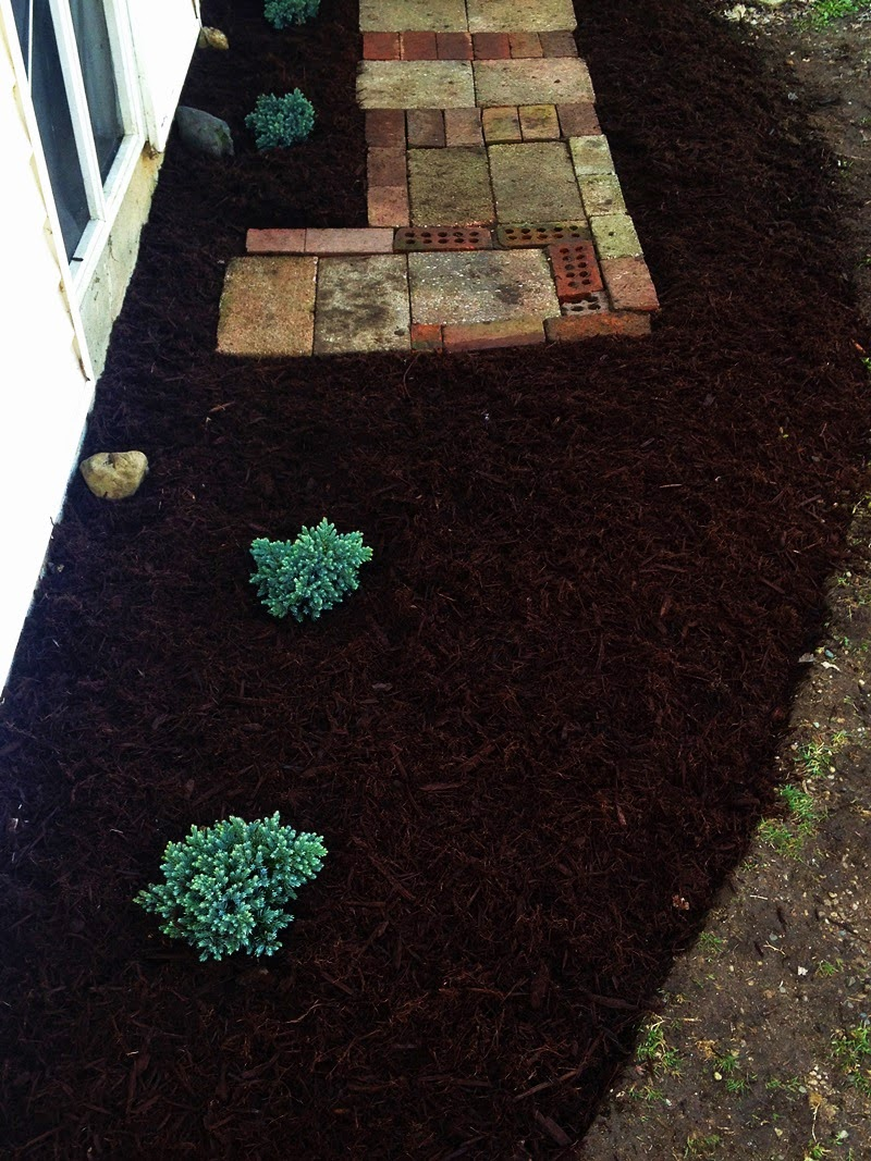diy backyard landscape