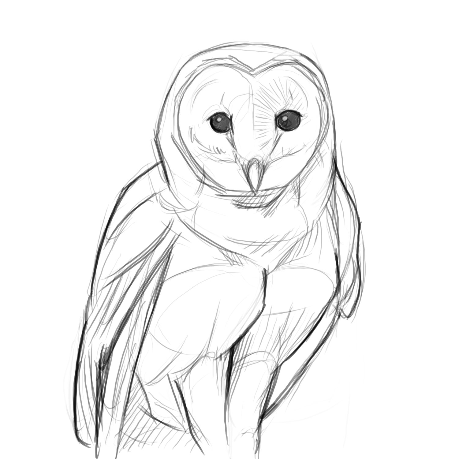 Owl sketches pictures to pin on pinterest pinsdaddy for Draw the owl