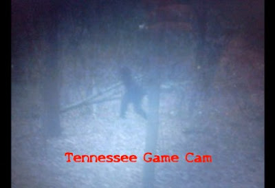 Tennessee Bigfoot Picture