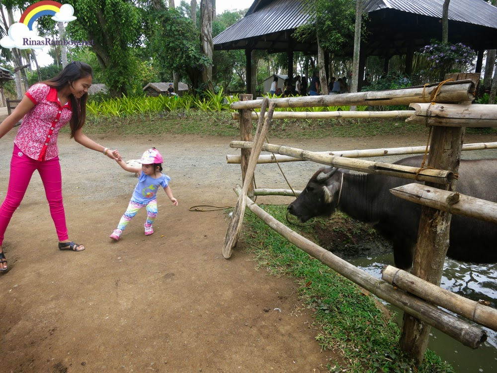 carabao fun farm