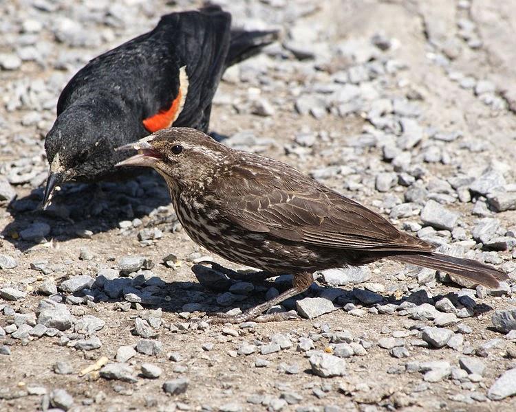 Aves silvestres y jalea de uva | Estilos de vida | elkodaily.com