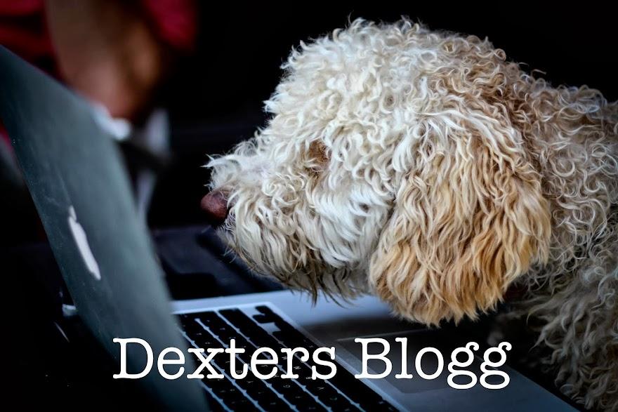 Dexters blogg
