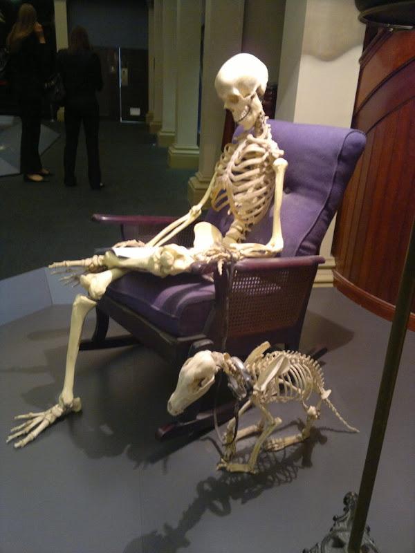 Skeleton Sitting On Chair