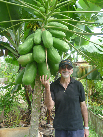 Árbol de papayas en Bali