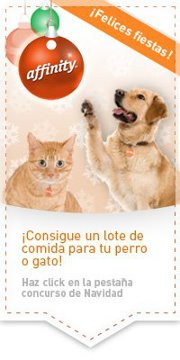 concurso de navidad para perros y gatos