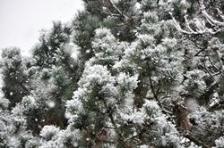 Schneetreiben an Karfreitag...