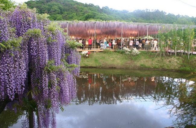 شلالات الزهور اليابانية Water_Fall_Flowers_Japan_4.jpg