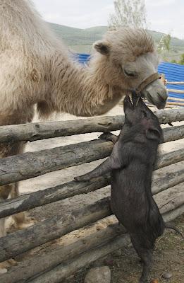 Unusual animal love