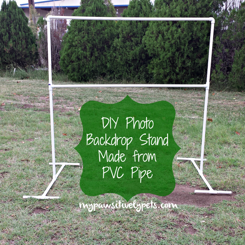 Diy Photo Backdrop Stand For Pets Pawsitively Pets