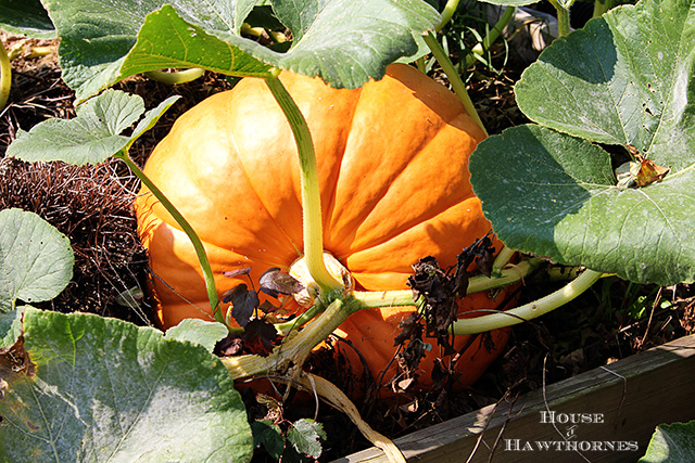 giant pumpkin fall front porch decor