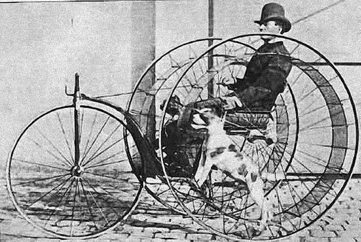 Velocípedo que utiliza perros