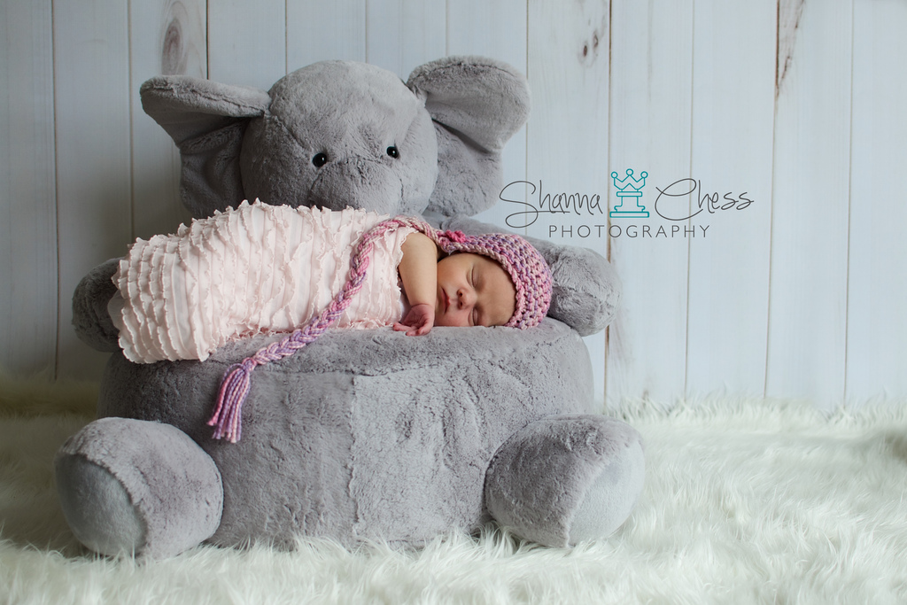 eugene, or newborn photography elephant