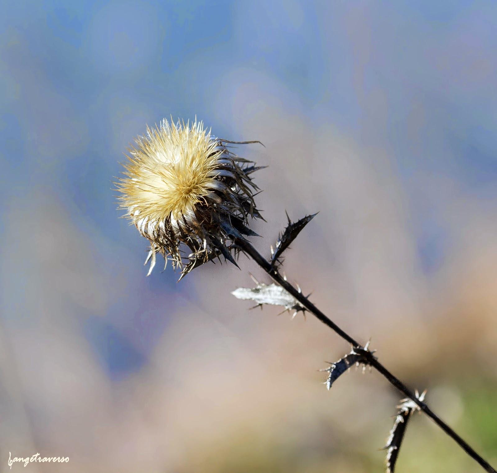 macro de printemps