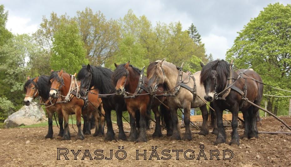 Ryasjö hästgård