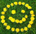 Dandelion Photos and Pictures 9