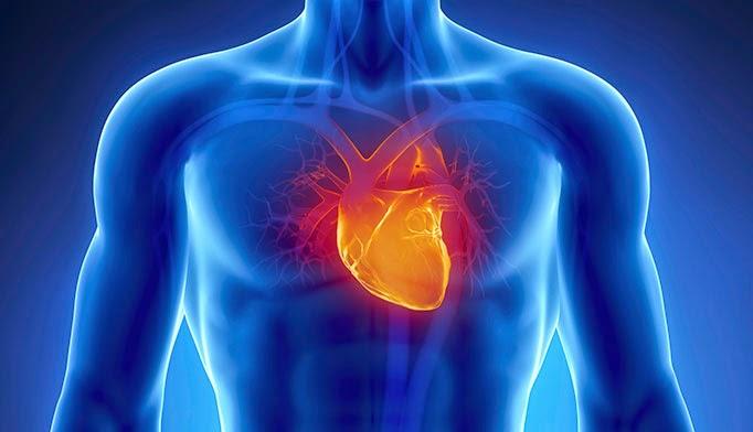 Image result for Cardiovascular Medicine