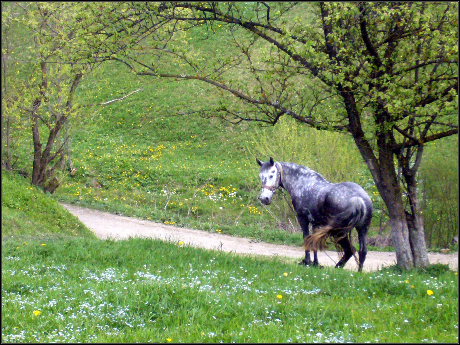 Пасется лошадь. Травы. На весне. Село в Карпатах. Пейзаж.