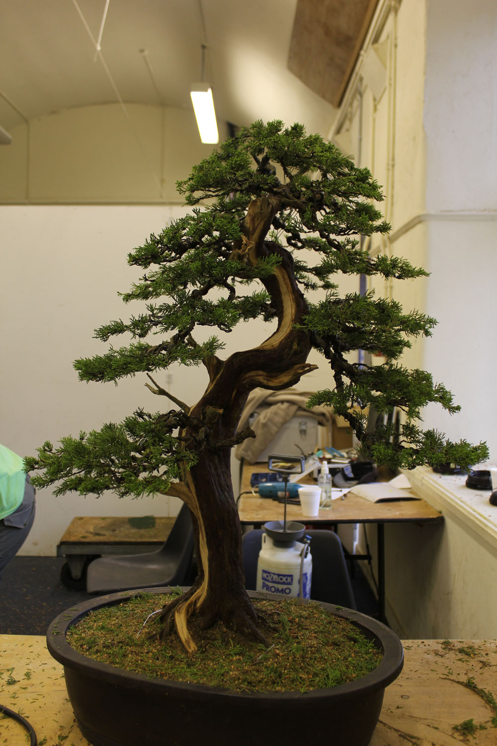 Wildwoodbonsai Paul Finch Demo At Bonsai Wales 2012