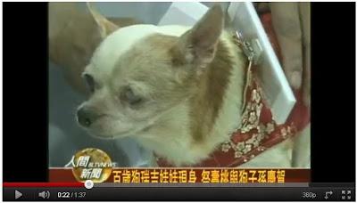 100歲 狗瑞 來旺 寵物展(台北寵物展的100歲狗瑞 來旺)