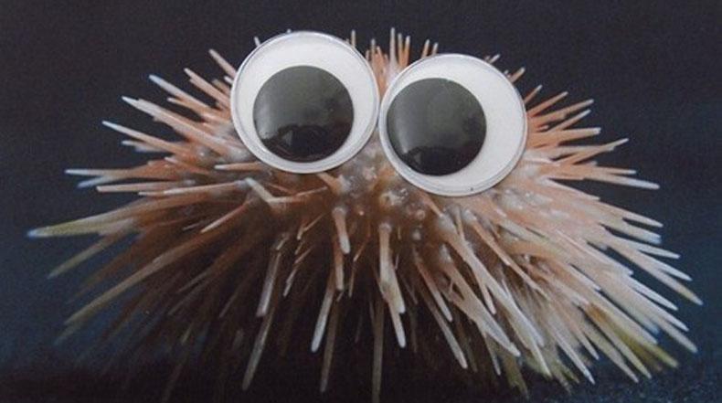 Convertir criaturas del mar en potenciales personajes de Disney y Pixar es tan fácil con los ojos saltones