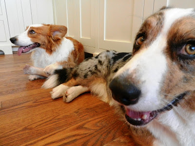 Image Result For Can Spay Dog