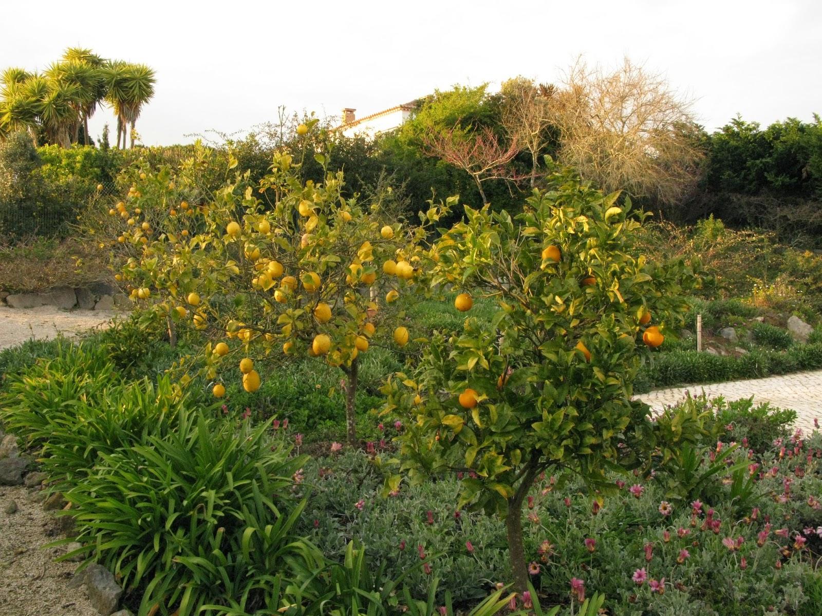 Au gr du march tartinade de thon la portugaise for Cuisine portugaise jardin