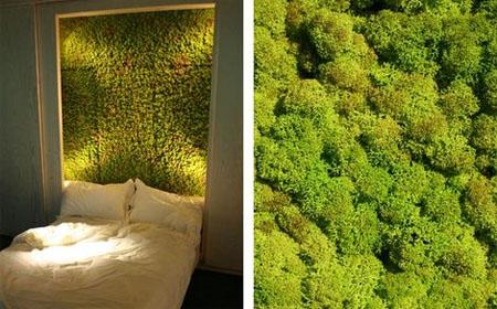 un muschio naturale per giardini verticali e complementi d arredo