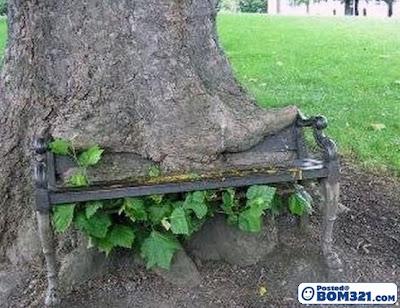 Bila Pokok Sudah Lapar