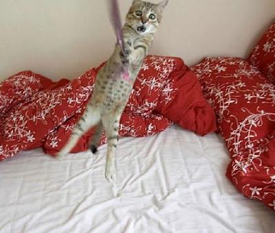 smiješne slike mačke Tarzan