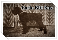 http://hairyhope.blogspot.cz/p/carlo-bitt-box.html