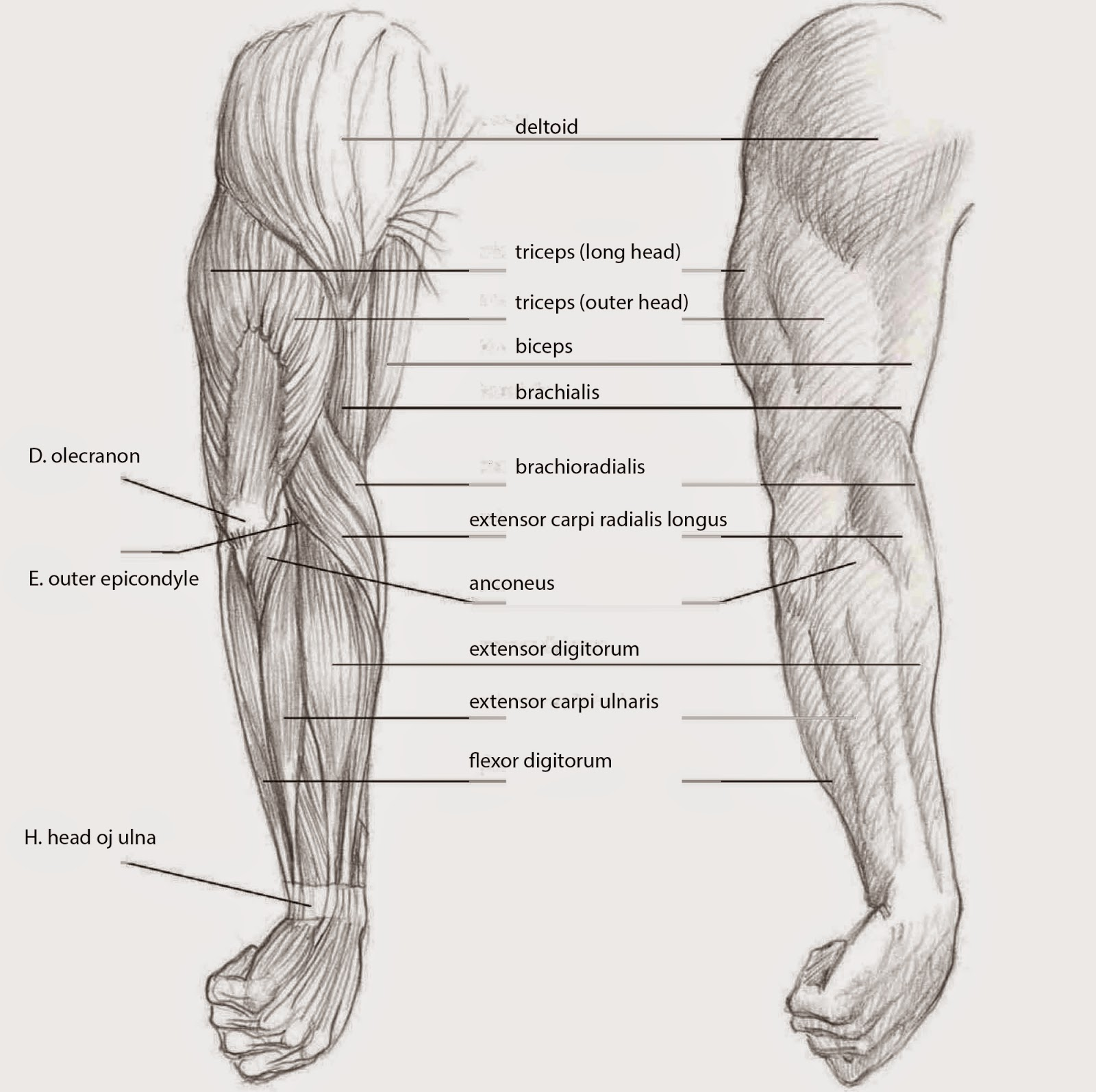 Drawings: DEPICTING THE ARM SIDE VIEW