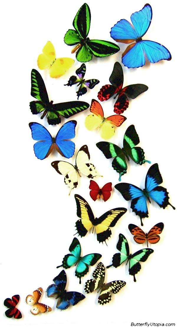 ButterflyUtopia.com - Butterfly Dance