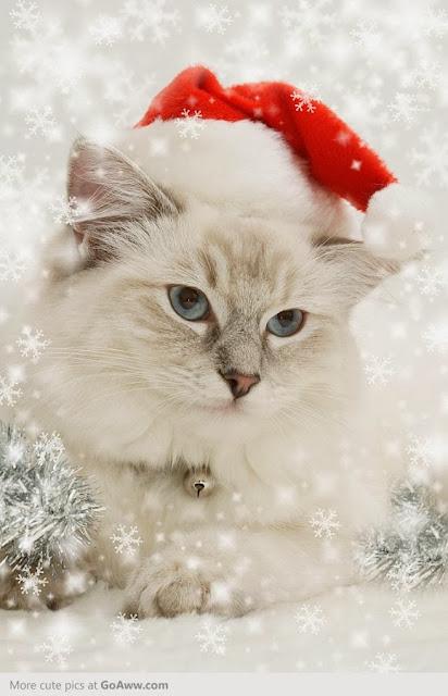 http://goaww.com/pic/7Jp9p/christmascat.html