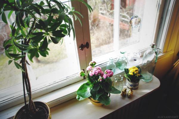 aliciasivert, alicia sivertsson, window, room, flower, flowers, glass, vase, vases, nature, interiour, interior, window sill, sill, windowsill, spring, fönsterbräda, fönsterbleck, fönster, glas, vas, vaser, glasvas, blommor, blomma, vår, rum, interiör, inredning, hem, vårblomster