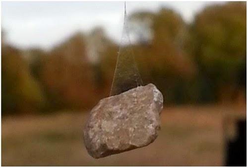 Menakjubkan Labah labah Menghasilkan Jaring Labah labah Menggunakan Batu