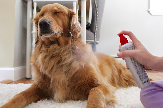 Grooming your dog with CHI for Dogs deodorizing spray
