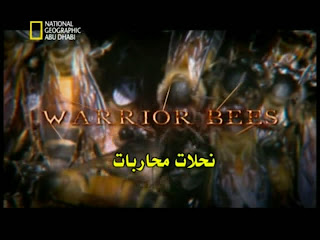 النحلات المحاربة