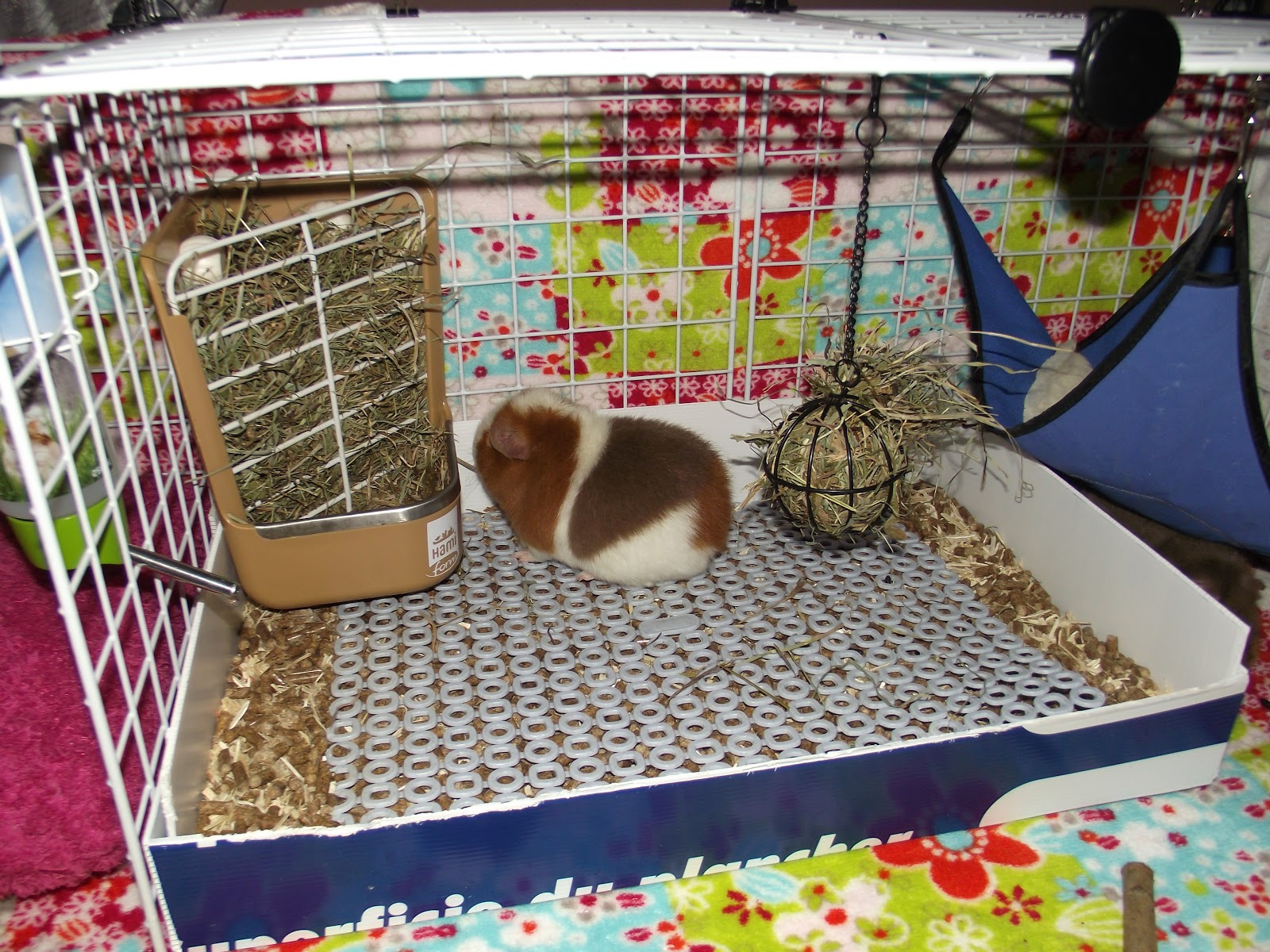 Au fil des jours the cavy cage for How to make a guinea pig bed