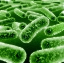 probiotik bestagaric