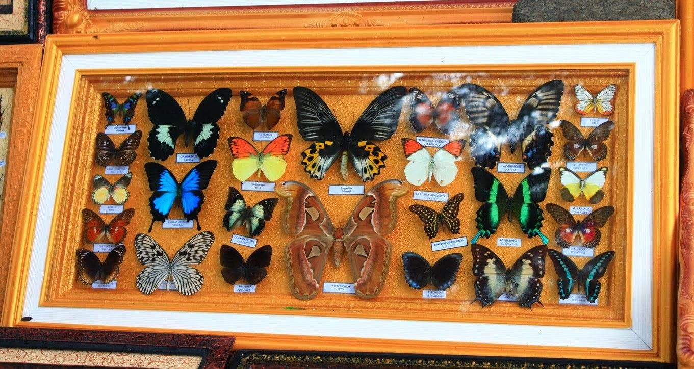 kerajinan berbahan kupu-kupu