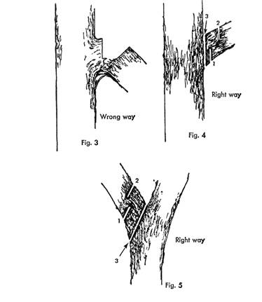 Tree Sense: Pruning Basics: Trimming/Removing A Dead nch on tree arm designs, flowers designs, tree of life designs, candle designs, tree twig designs, tree root designs, tree trunk designs, scarecrow designs, tree leaf designs, snowman designs, tree palm designs, tree leg designs, tree back designs, beach designs, tree hand designs, tree wood designs, pencil designs, snow designs, tree family designs,